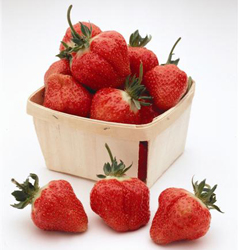 Order Cabot Strawberry Plants, Strawberries