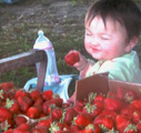 Daisy Farms - Order Strawberry Plants, Raspberry Plants, Blueberry and Blackberry Plants, Aparagus Plants and Horseradish Roots